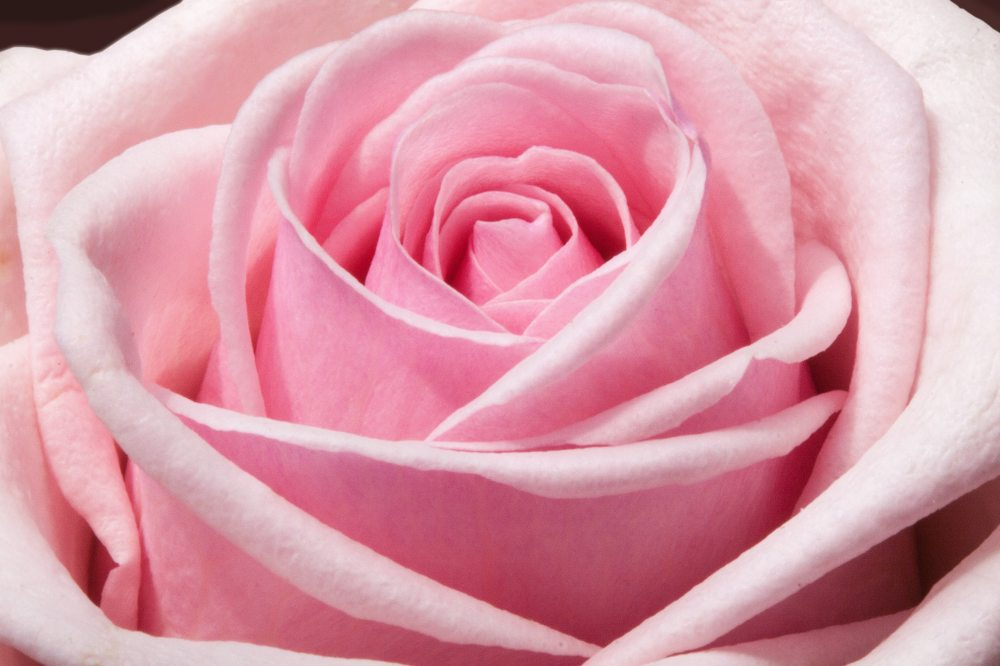 bloom-blossom-decorative-54323.jpg